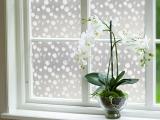 Декоративная пленка на окнах