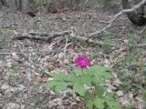 Цветок в лесу