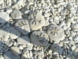 Рисунки камнями